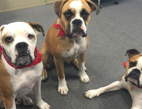 Meet the Office K9-to-5ers